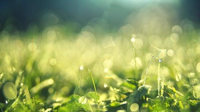 meadow-3743023_640