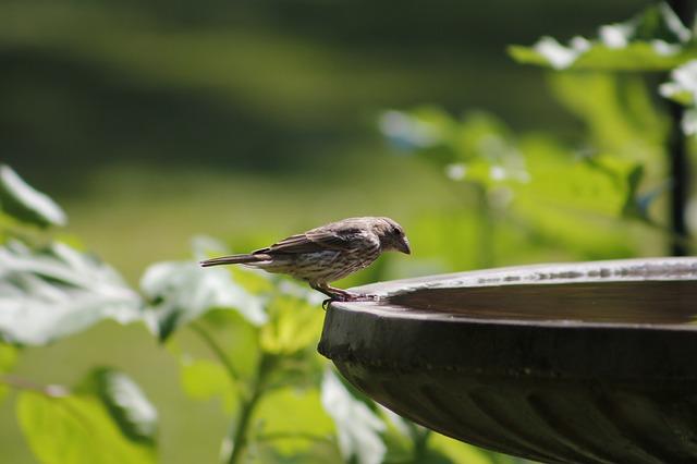 bird-3385940_640