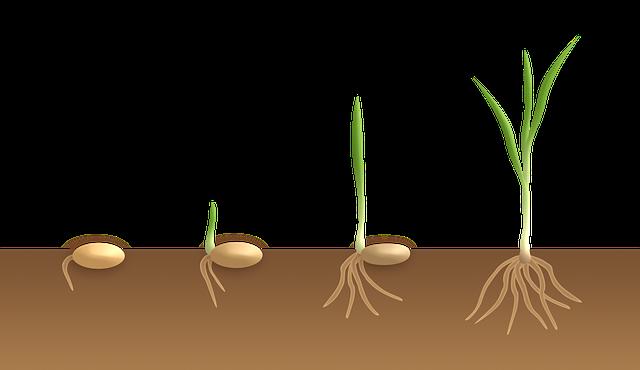 germination-3989958_640