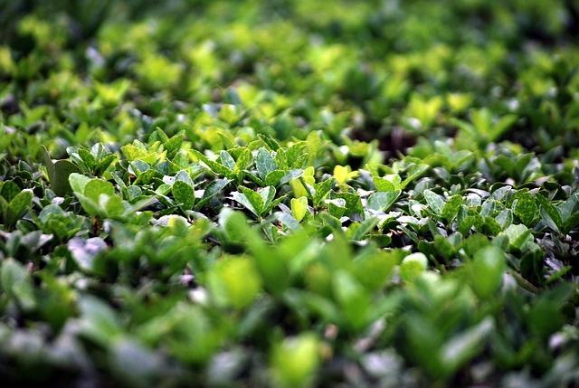 shrub-19693_640
